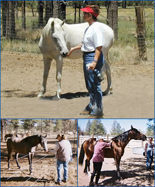 Equine Experiential Learning